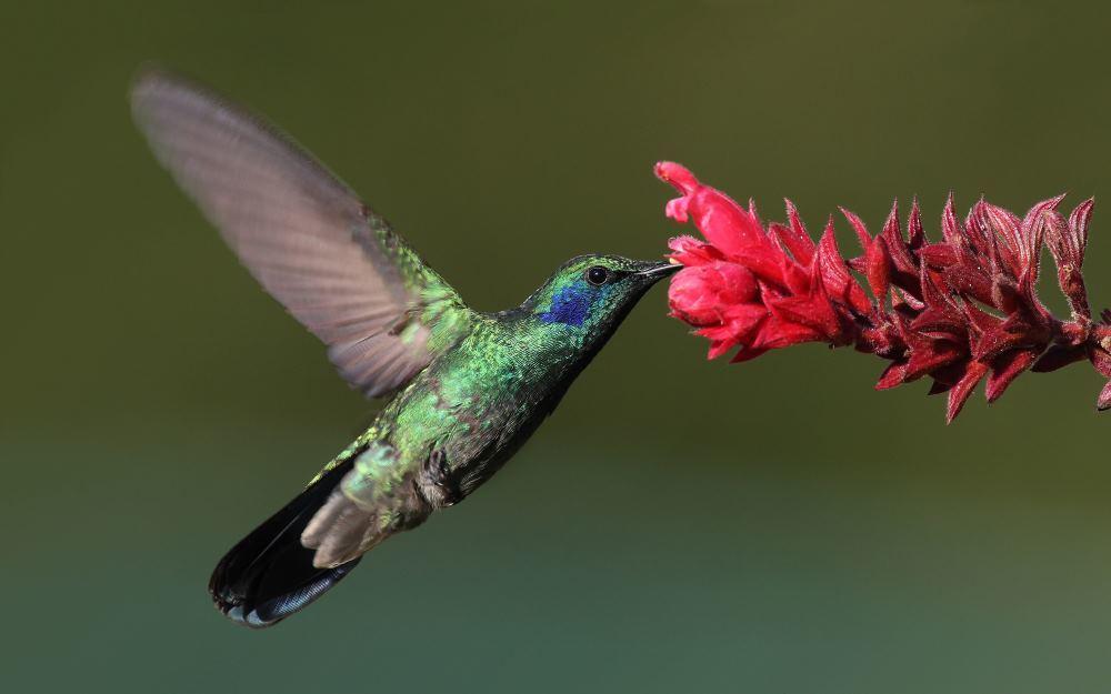 Физика в мире животных: колибри и ее полет - 1