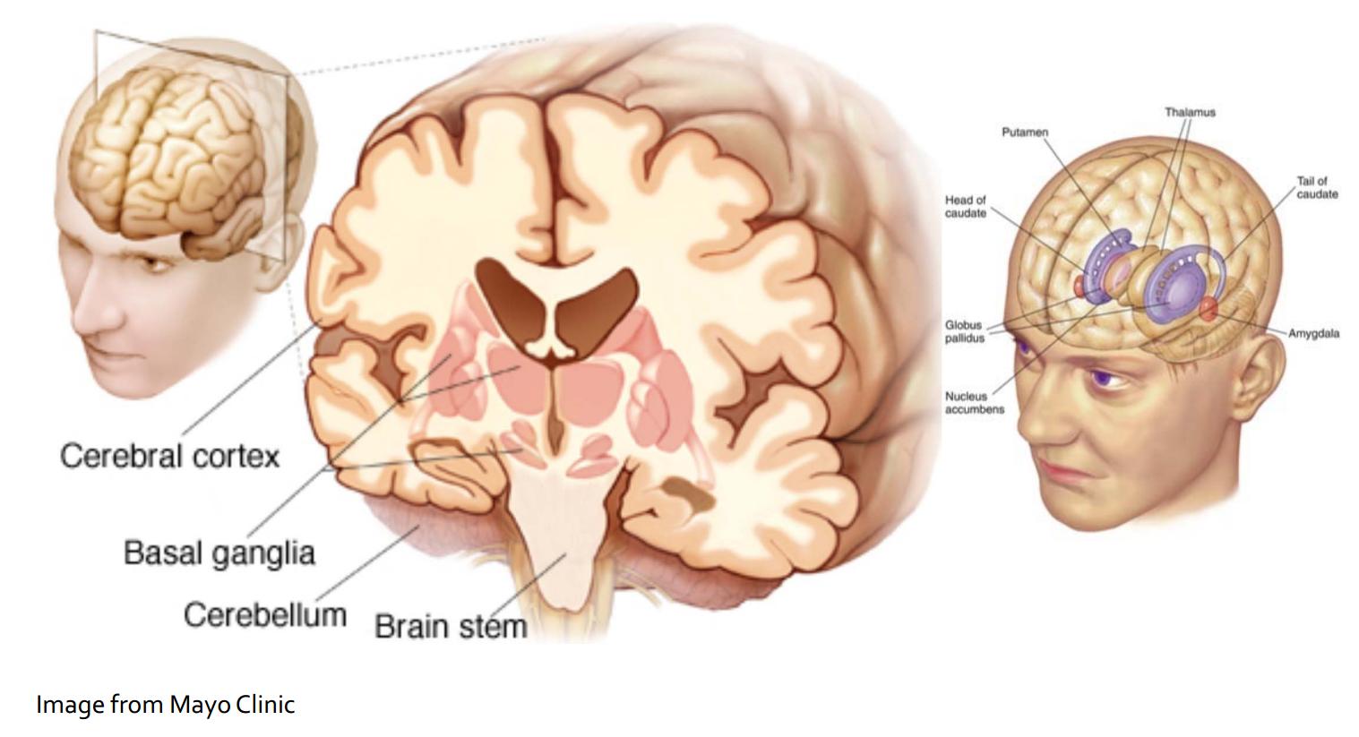 Логика сознания. Часть 6. Кора мозга как пространство вычисления смыслов - 3