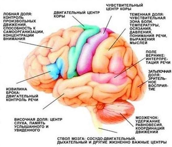 Логика сознания. Часть 6. Кора мозга как пространство вычисления смыслов - 4