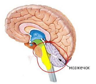Логика сознания. Часть 6. Кора мозга как пространство вычисления смыслов - 5