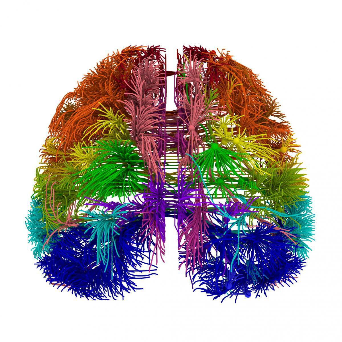 Логика сознания. Часть 6. Кора мозга как пространство вычисления смыслов - 7