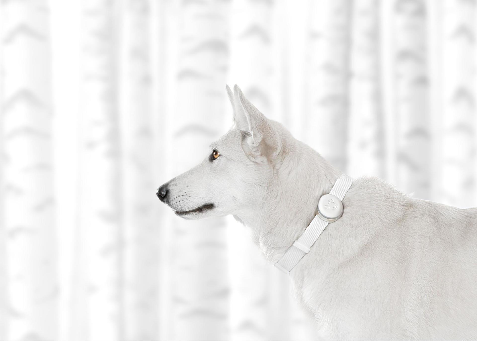 Как мы делаем первый российский трекер для собак Mishiko - 7