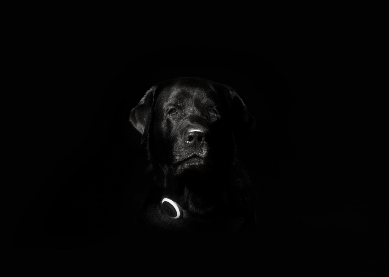 Как мы делаем первый российский трекер для собак Mishiko - 1