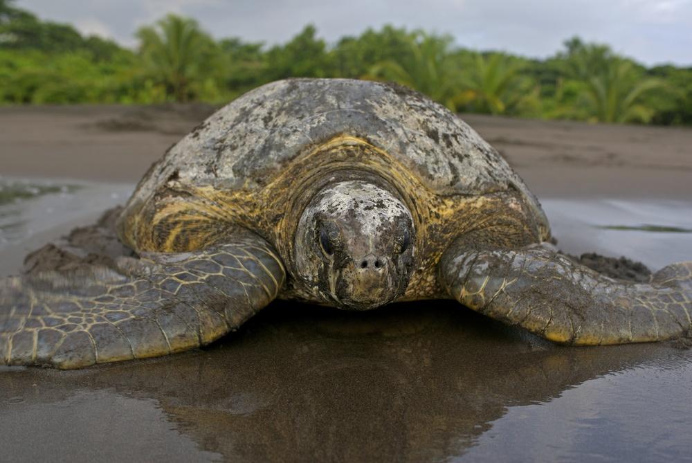 Физика в мире животных: морские черепахи и их «компас» - 2