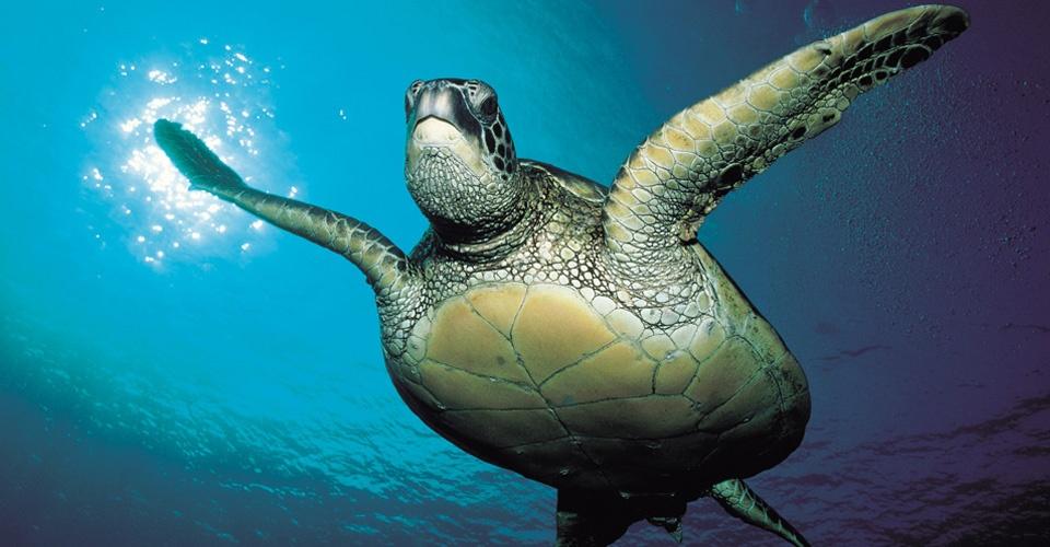 Физика в мире животных: морские черепахи и их «компас» - 1