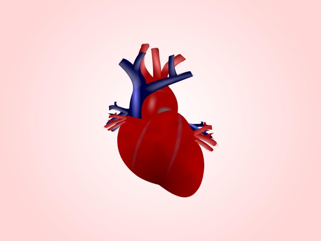 Сердце начинает работать еще до того, как полностью сформируется - 1