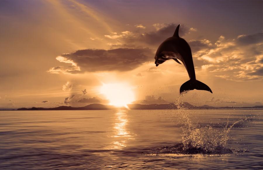 Физика в мире животных: дельфины и эхолокация - 2