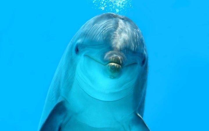 Физика в мире животных: дельфины и эхолокация - 1