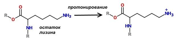 Фармакологическая модуляция памяти. Часть 2 - 4