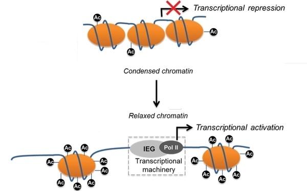 Фармакологическая модуляция памяти. Часть 2 - 5