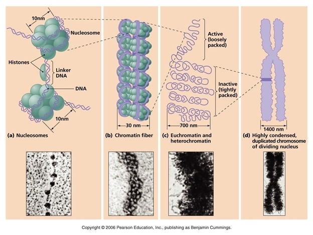 Фармакологическая модуляция памяти. Часть 2 - 1