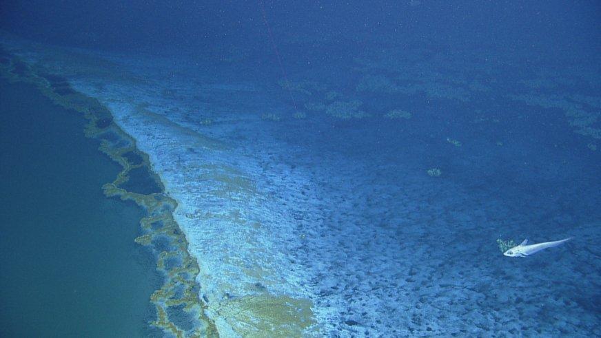 На дне Мексиканского залива нашли ядовитое озеро - 4