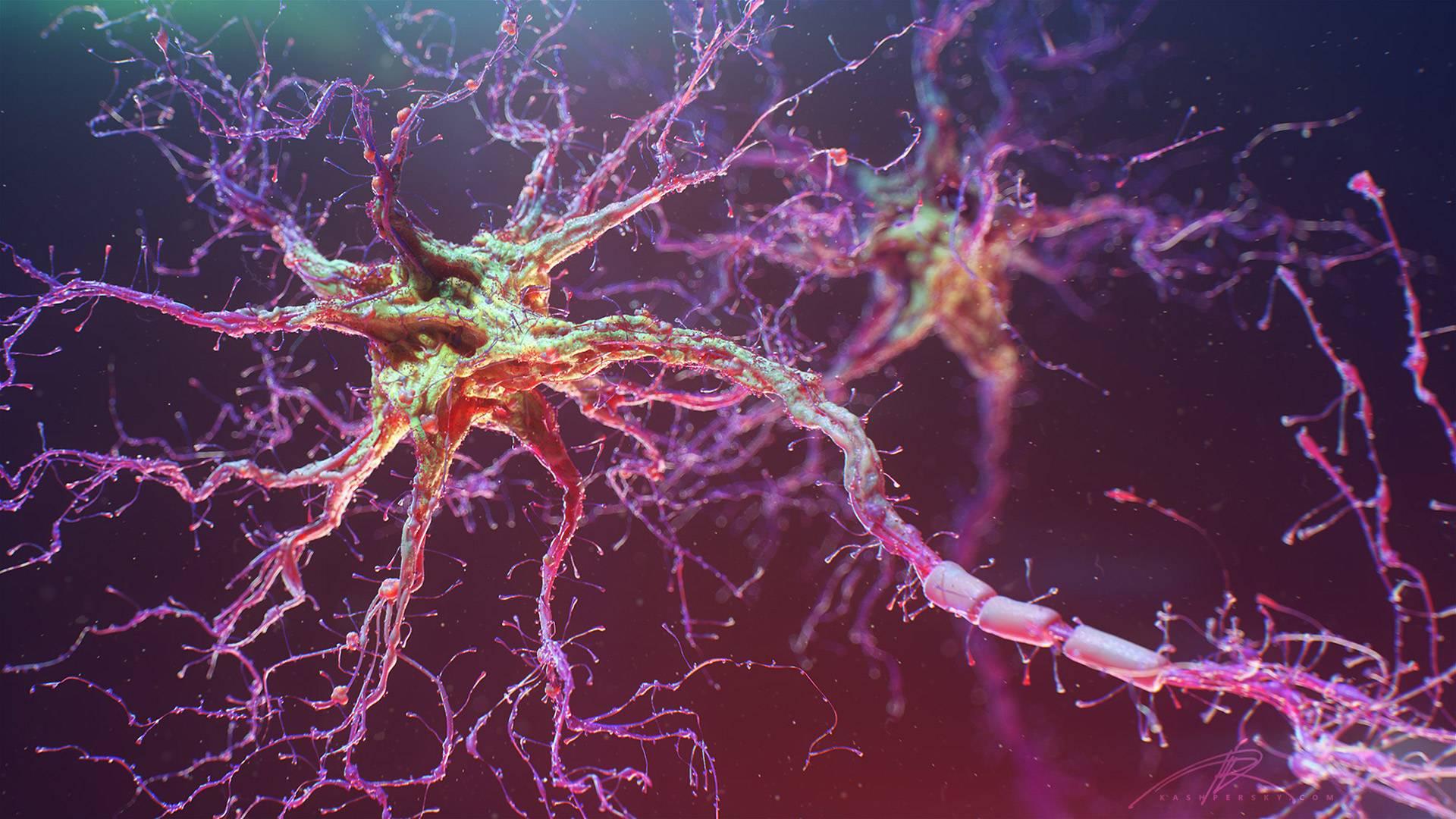 Люминесценция помогает ученым изучать работу отдельных нейронов мозга животных - 1