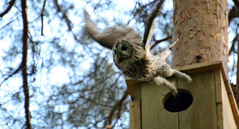 Полет на слабом сигнале: совы, ястребы, бобры и видеонаблюдение - 1