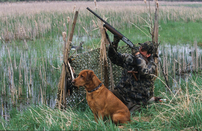 Охота как эволюционный фактор. Птицы становятся умнее - 1