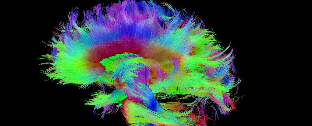 В Гарварде считают, что нашли физический центр человеческого сознания - 1