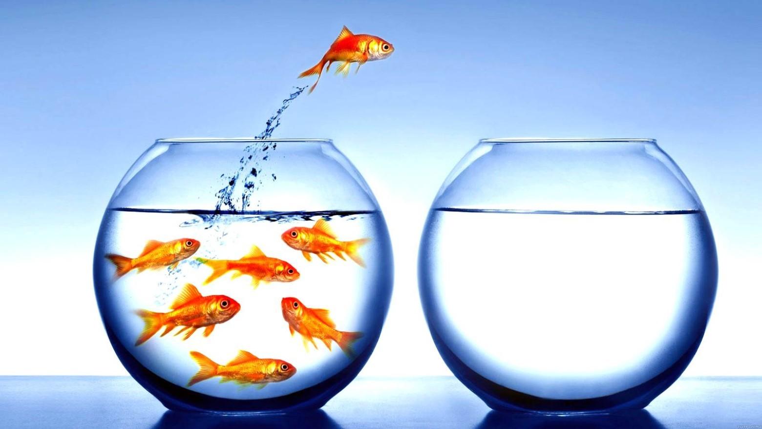 Иллюзии мозга. Эффект большой рыбы в маленьком пруду - 1