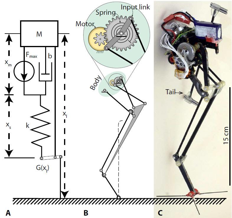 Робот с рекордным показателем вертикальной прыгучести освоил паркур - 1