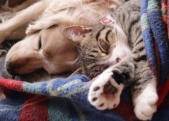 Сожительство с животными продлевает жизнь