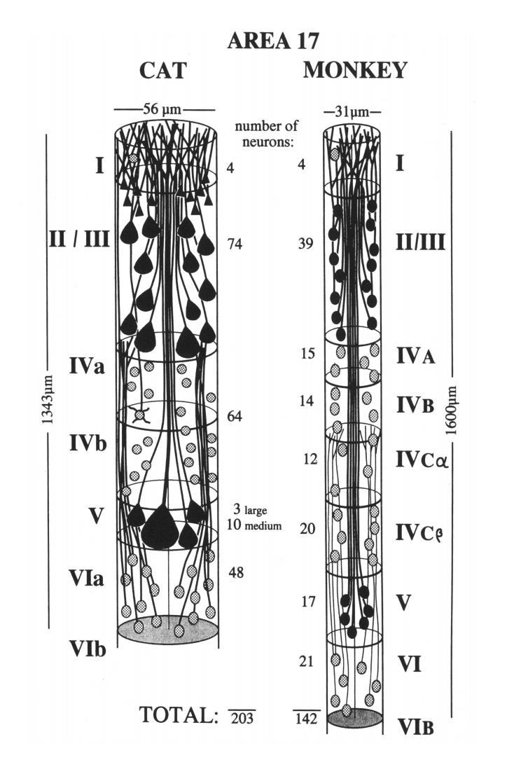 Логика сознания. Часть 9. Искусственные нейронные сети и миниколонки реальной коры - 17
