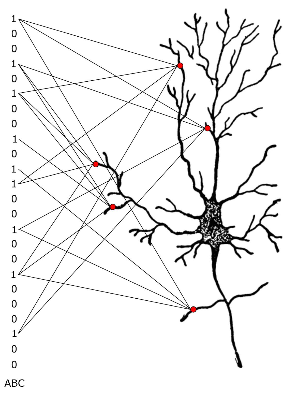Логика сознания. Часть 9. Искусственные нейронные сети и миниколонки реальной коры - 18
