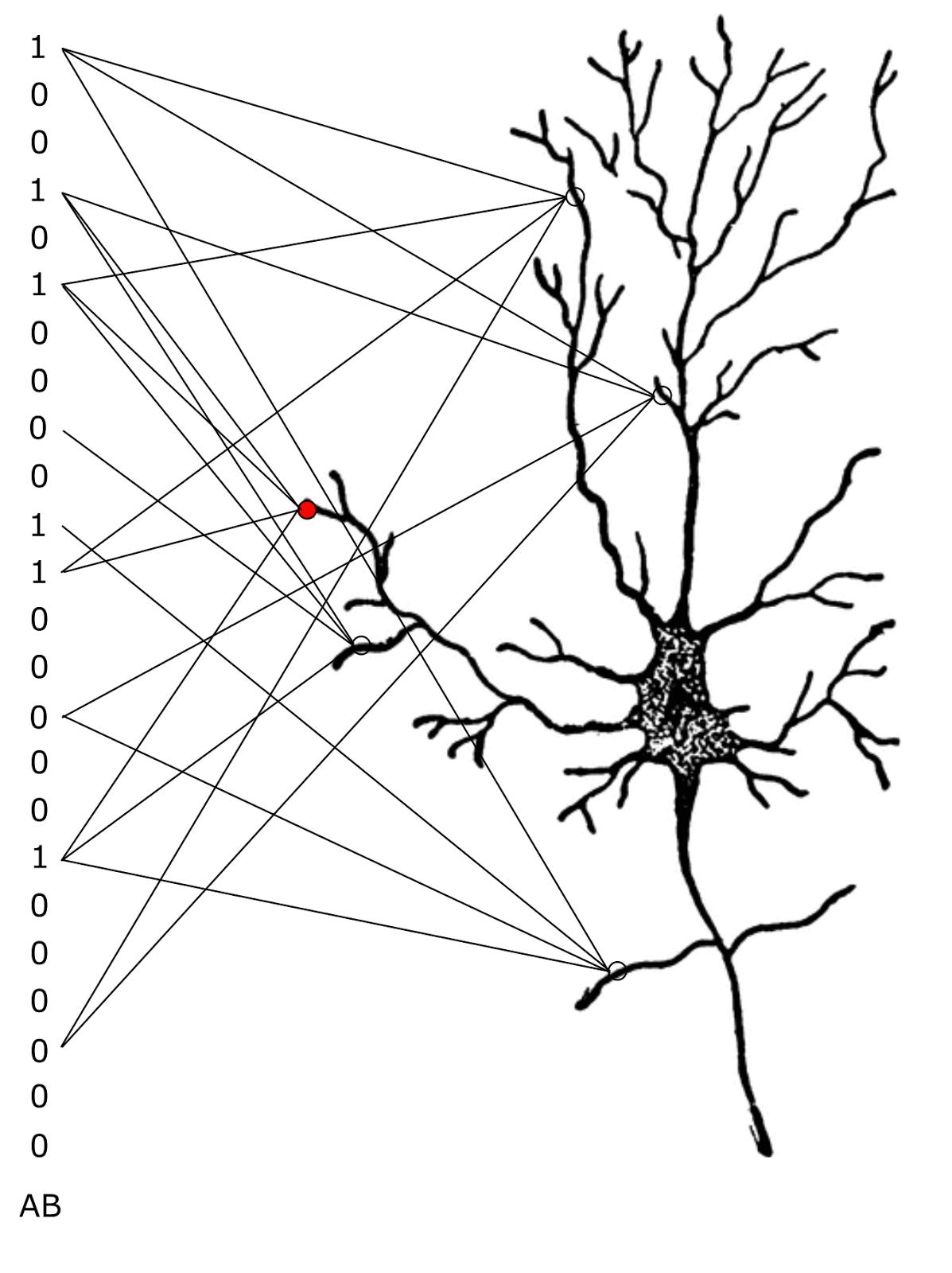 Логика сознания. Часть 9. Искусственные нейронные сети и миниколонки реальной коры - 21