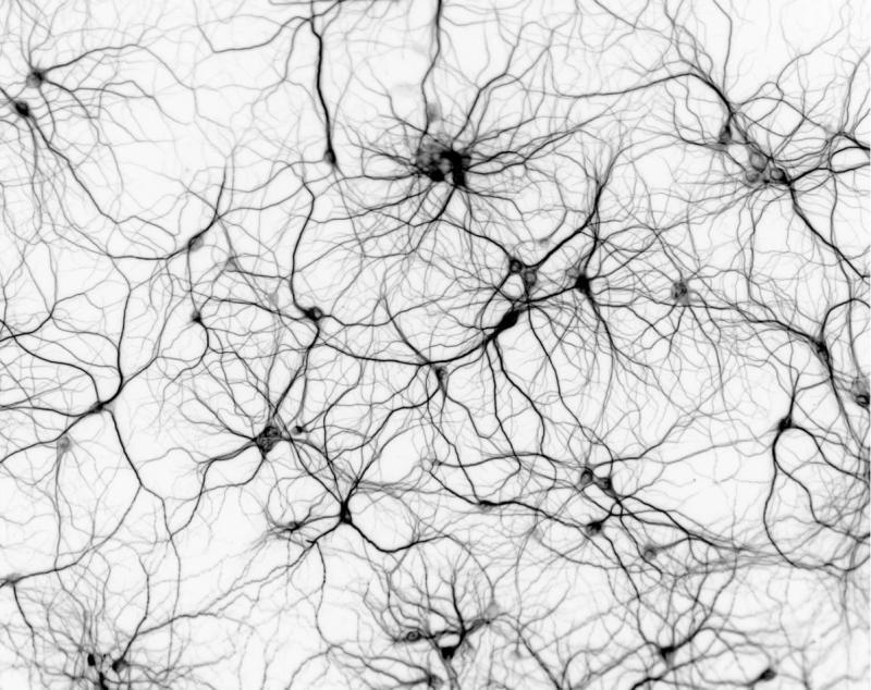 Логика сознания. Часть 9. Искусственные нейронные сети и миниколонки реальной коры - 1