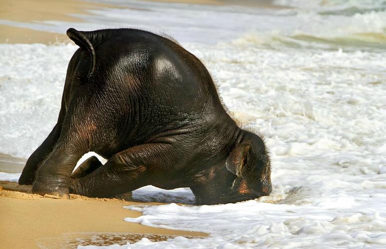 Даже слон не выдержит столько данных