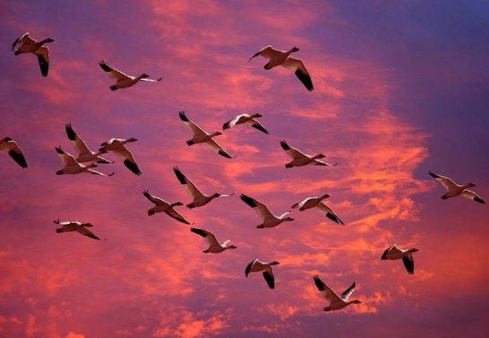 Ученые объяснили, почему птицы мигрируют