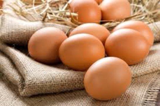 Ученым удалось вырастить яйцо без какого-либо вмешательства курицы