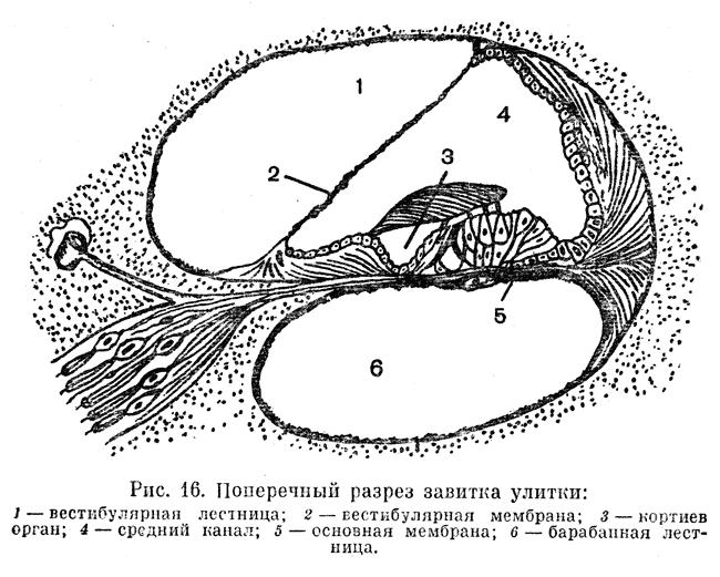 Логика сознания. Часть 11. Естественное кодирование зрительной и звуковой информации - 22