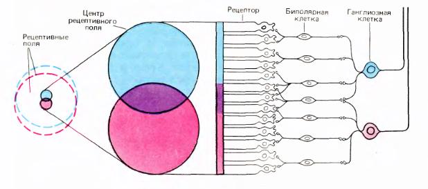 Логика сознания. Часть 11. Естественное кодирование зрительной и звуковой информации - 6