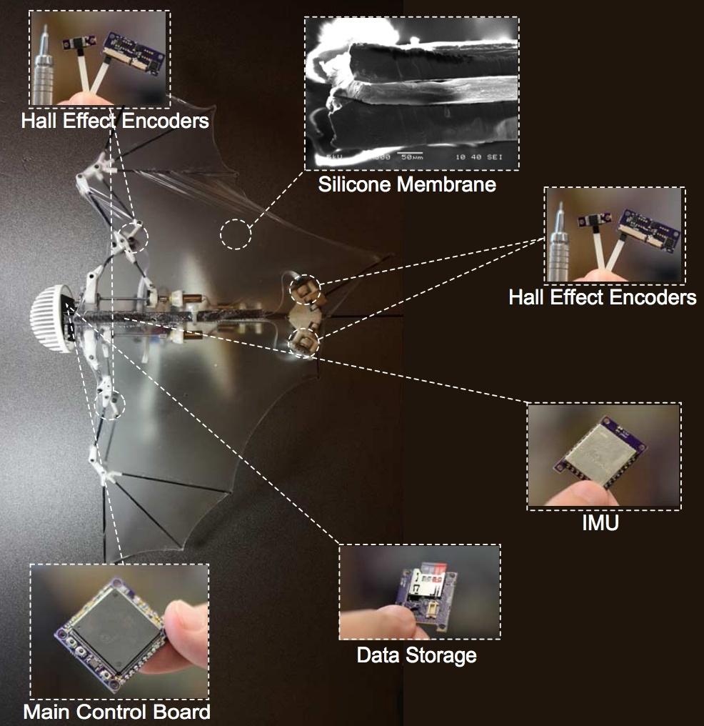 В Caltech создали робота-летучую мышь - 2