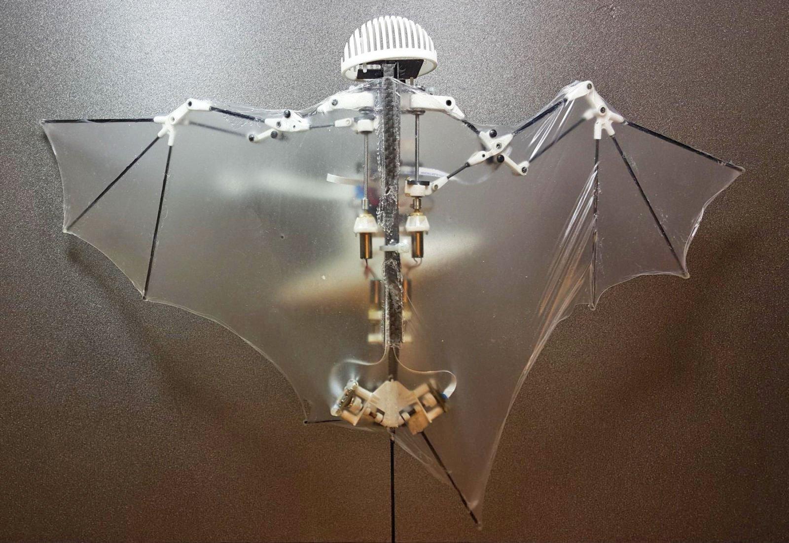 В Caltech создали робота-летучую мышь - 1