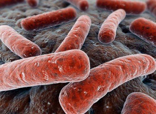 Британские ученые нашли новый способ изучения туберкулеза