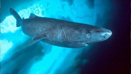 В мире обнаружен новый вид акул
