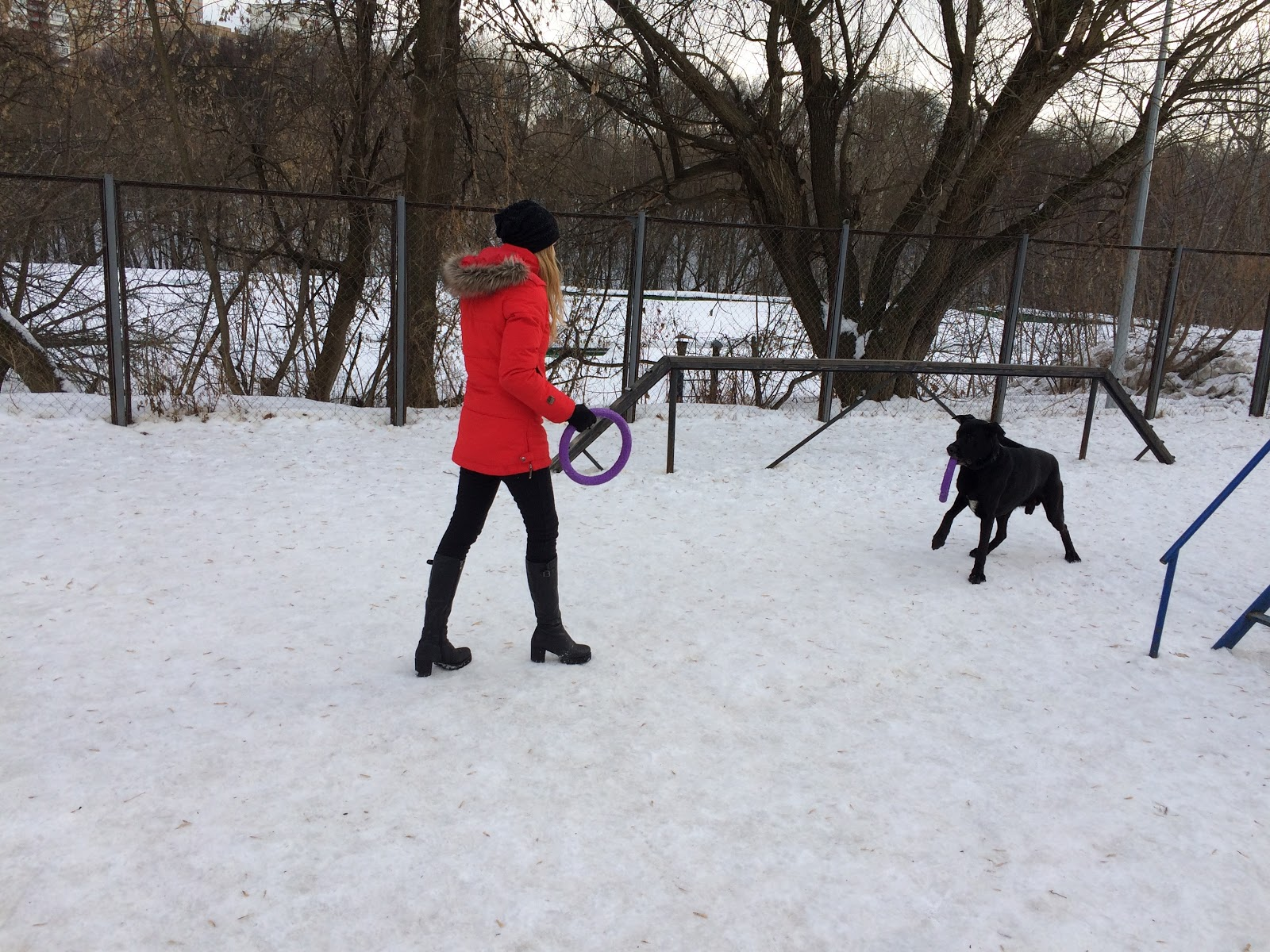 Тестируем на животных: как работает GPS-трекер для собак Mishiko в Москве? - 10