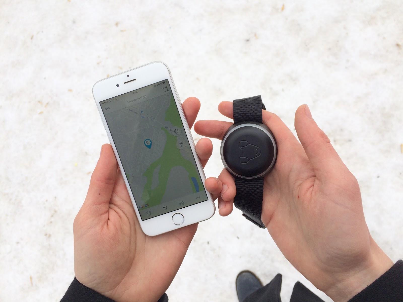 Тестируем на животных: как работает GPS-трекер для собак Mishiko в Москве? - 17