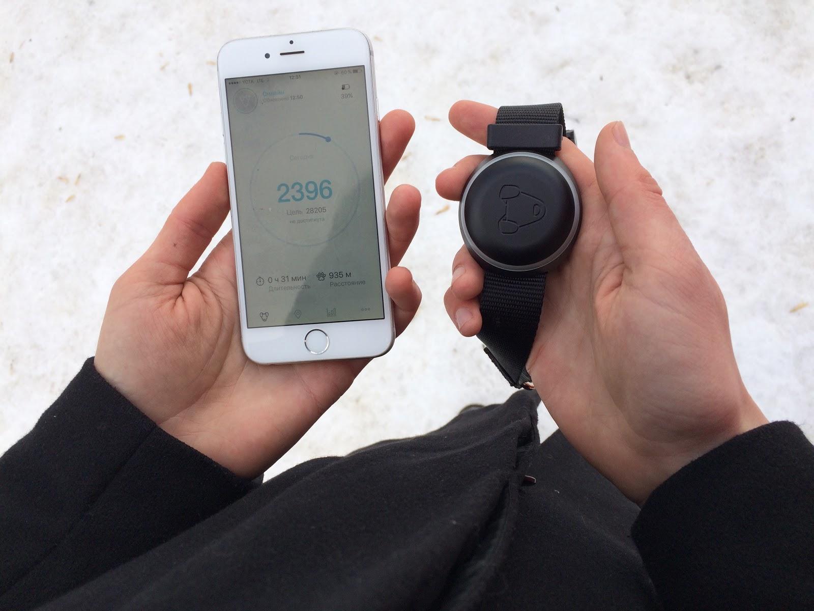 Тестируем на животных: как работает GPS-трекер для собак Mishiko в Москве? - 6