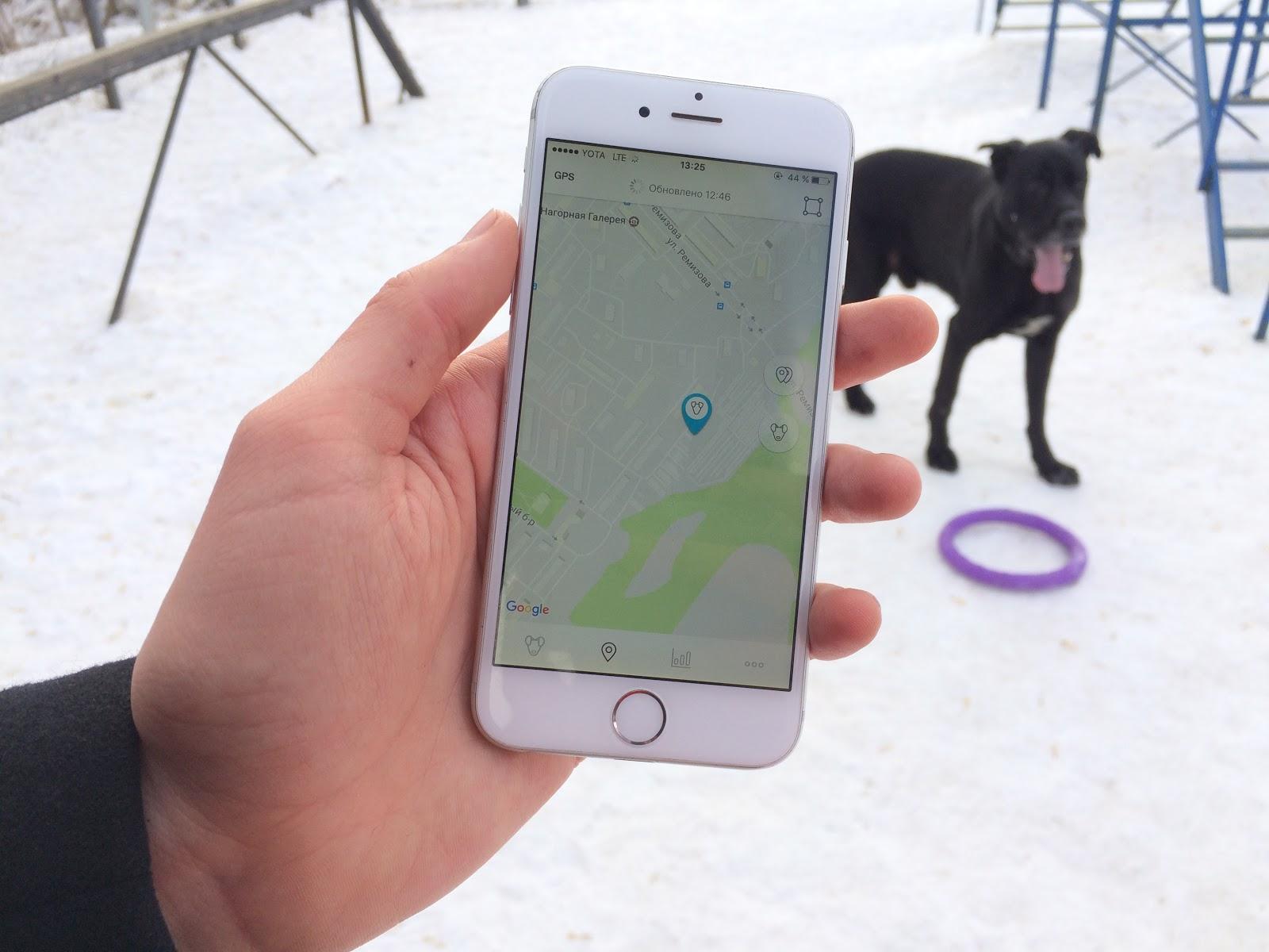 Тестируем на животных: как работает GPS-трекер для собак Mishiko в Москве? - 8