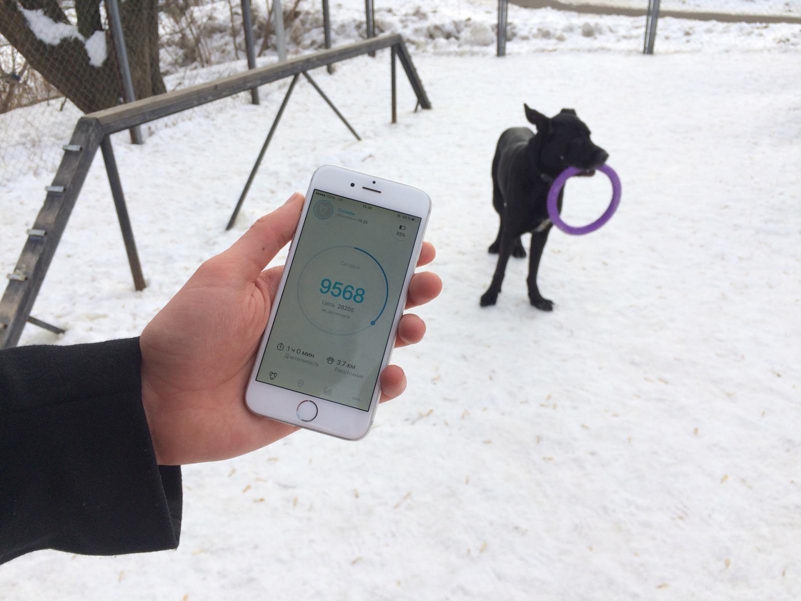 Тестируем на животных: как работает GPS-трекер для собак Mishiko в Москве? - 1