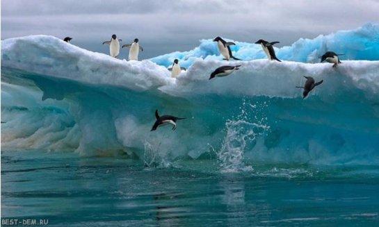 В Арктике неразбериха из-за глобального потепления
