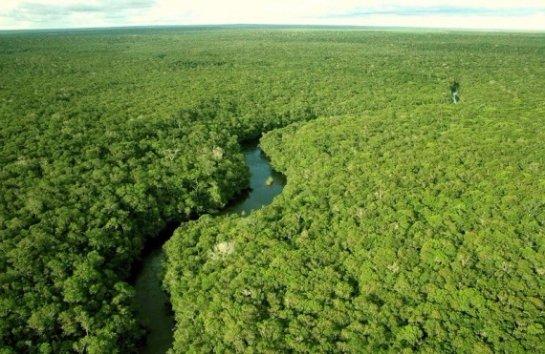 По мнению ученых, амазонские леса были насаждены людьми