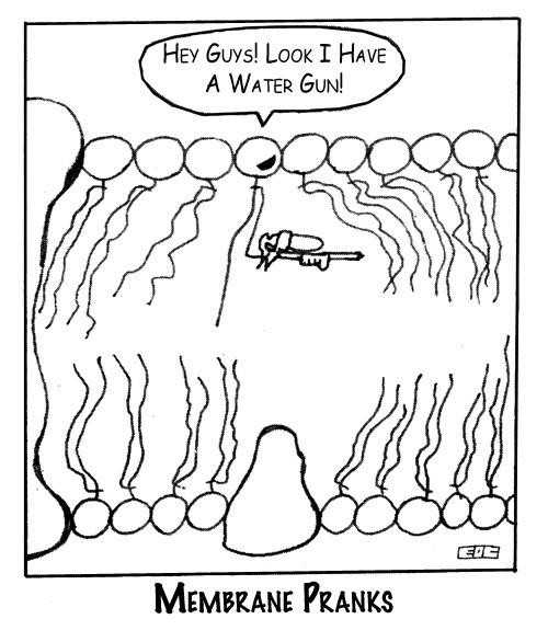 Генная инженерия бактерий: как внести нужные нам гены в составе плазмидного вектора в бактерию - 4