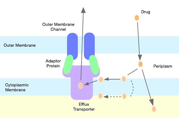 Генная инженерия бактерий: как внести нужные нам гены в составе плазмидного вектора в бактерию - 8