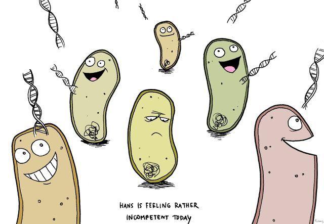 Генная инженерия бактерий: как внести нужные нам гены в составе плазмидного вектора в бактерию - 1