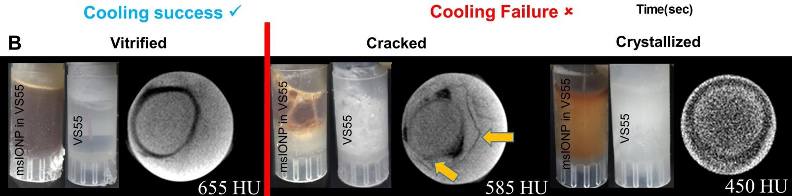Исследователи разработали технологию быстрой разморозки криоконсервированной ткани - 3