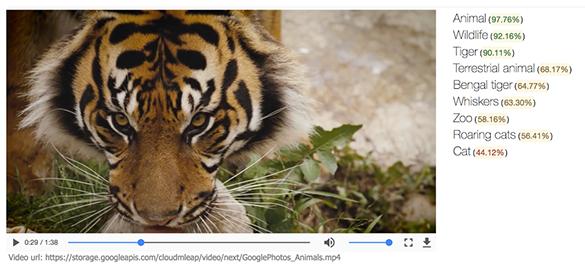 Google представила облачное API для распознавания объектов на видео - 1