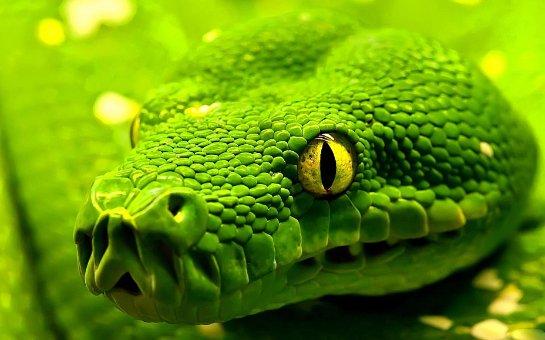 На острове Гуам экологическая катастрофа из-за большого количества змей