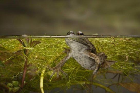 Чтобы лучше тебя видеть: зачем жизнь вышла из воды на сушу?